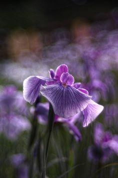 Purple/Violet / Green