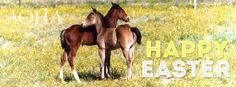 Happy Easter from your AQHA family!