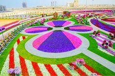 """Dubai Miracle Garden, Dubai Now the """"world's biggest natural flower garden,"""" this sq. foot garden contains over 45 million flowers, and is maintained through drip irrigation and the recycling of waste water. (via) Most Beautiful Gardens, Amazing Gardens, Beautiful Flowers, Beautiful Scenery, Simply Beautiful, Kew Gardens, Dubai Garden, Million Flowers, Dubai Miracle Garden"""
