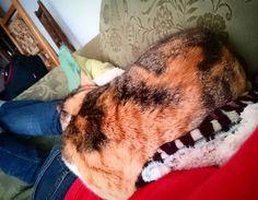 Aiuda :( #gato #cat #ayuda #help #atrapado #trapped