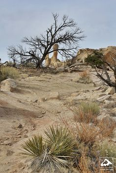 Trail to Chimney Rock and Pedernal, Chimney Rock National Monument, Ghost Ranch, Home and Studio of Georgia O'Keeffe, Abiquiu, New Mexico by Isaac Borrego
