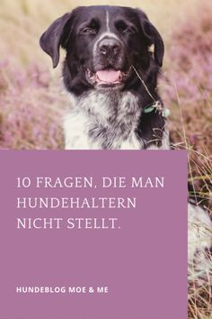10 Fragen, die man Hundehaltern nicht stellt.