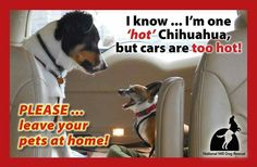 Summer is here, please leave your fur babies at home and not left in a hot car!! It is better for them to be lonely at home without you for a short time, than for them to lose their life waiting for you in a hot car!