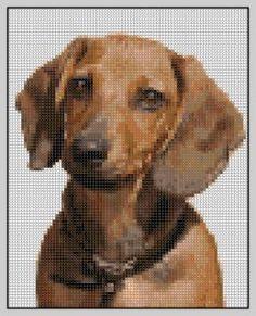 Free Dachshund Cross Stitch Pattern