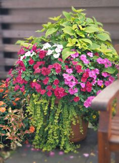 A Large Patio Container: (1) Coleus, (2) Impatiens, (3) Lysimachia