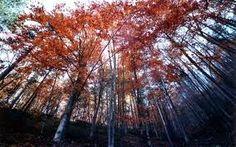 """Virgin"" Forest of Frakto, Drama, Greece"