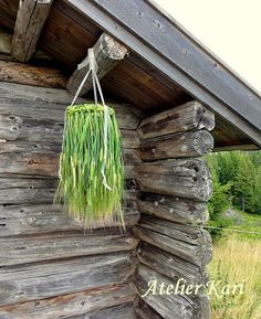 Hengekrone av bygg / Atelier Kari. When the corn matures can create the most delicious cereal crowns. It is easiest to achieve when the grain is not quite ripe, but slightly green and soft in the stems. When they dry they will eventually yellow in color and slightly fragile to transport.