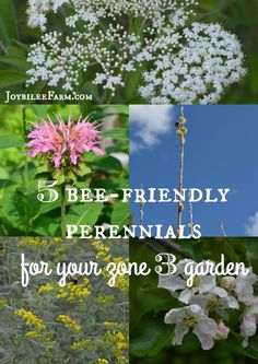 As You Are Planning Your Spring Garden, Remember To Plant Perennials For The Bees, Too. These 5 Offer Benefit To You And Them. It's A Win-Win When You Plant For The Bees. Attempt These 5 Bee-Friendly Perennials, Even In Zone 3 Growing Herbs, Growing Flowers, Planting Flowers, Flower Gardening, Flowers Garden, Garden Plants, House Plants, Bee Friendly Flowers, Bee Friendly Plants