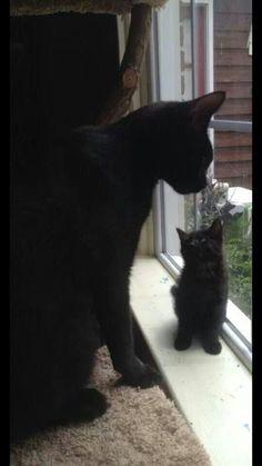 =^..^= Black Cat & Black Kitten