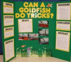 Quatic Fish and Goldfish science fair projects display board