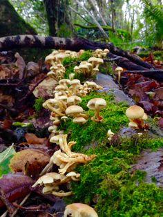 Fungi, Stuffed Mushrooms, Vegetables, Nature, Photos, Food, Pictures, Meal, Mushrooms