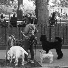 http://washingtonsquareparkerz.com/livmargareteliassen-walker-washingtonsquarepark-nyc/   @livmargareteliassen #walker #washingtonsquarepark #nyc