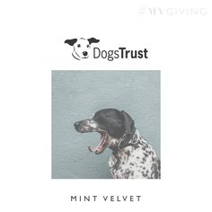 DOG'S TRUST  Founded in 1891, Dogs Trust (formerly the National Canine Defence League) is the largest dog welfare charity in the UK. Their mission is to bring about the day when all dogs can enjoy a happy life, free from the threat of unnecessary destruction. #MVGIVING