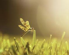 Golden Hour by Olya BIK on 500px