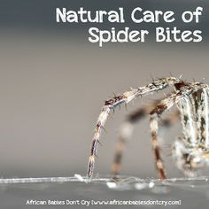 Natural Care of Spider Bites Soda to the rescue, again...& tea tree oil..