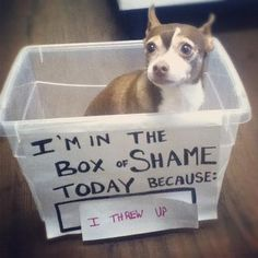Funny pictures about Box Of Shame. Oh, and cool pics about Box Of Shame. Also, Box Of Shame. Funny Cute, The Funny, Funny Dogs, Funny Animals, Funny Memes, Adorable Animals, Funny Kitties, Silly Dogs, Funny Fails