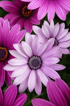 Shades of Purple Flowers