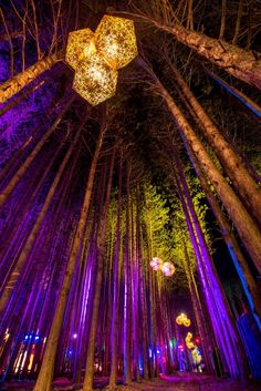 Gallery – The Art of Electric Forest Forest Festival, Art Festival, Festival Wear, Festival Outfits, Forest Light, Electric Forest, Electric Daisy Festival, Festivals Around The World, Neon