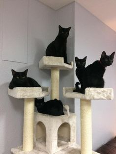 Cat Tree For Sure Pretty Cats Cat In Heat Cute Cats