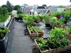 view of neighbour's roof tops Rooftop Vegetable Garden - would love to find a building that would let me do this!Rooftop Vegetable Garden - would love to find a building that would let me do this! Grow Organic, Organic Farming, Organic Gardening, Urban Gardening, Rooftop Terrace, Terrace Garden, Terrace Ideas, Rooftop Gardens, Balcony Gardening