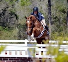 Stanley Cup - American Thoroughbred - Hunter for sale on Bigeq.com