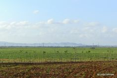 Fields and mountains of Cuba