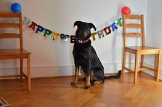 Chimay birthday, 1 year old - big girl 1 Year Olds, Big, Birthday, Animals, Birthdays, Animales, Animaux, Animal, Animais