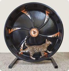 La rueda de ejercicios para gatos