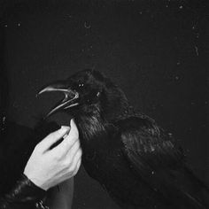 "Leave my loneliness unbroken!quit the bust above my door! Take thy beak from out my heart and take thy form from off my door!"" Quoth the raven ""Nevermore. Potnia Theron, Yennefer Cosplay, The Wicked The Divine, Yennefer Of Vengerberg, The Ancient Magus, Vegvisir, Six Of Crows, Witch Aesthetic, Hades Aesthetic"