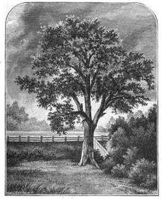 pontiac tree