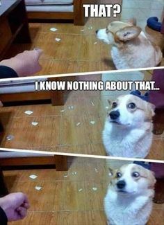 Funny Pictures 11-Pics