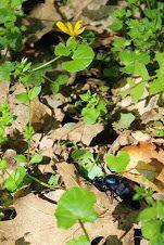 Fénykép Herbs, Plants, Mint, Herb, Plant, Planets, Medicinal Plants