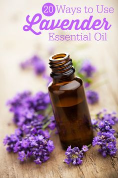 20 Ways to Use Lavender Essential Oil - Simply Stacie#comment-2549174&_a5y_p=3195128#comment-2549174&_a5y_p=3195128#comment-2549174&_a5y_p=3195128