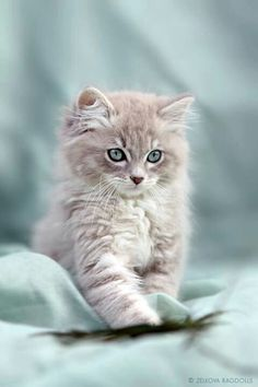 Pretty kitty! - Spoil your kitty at www.coolcattreehouse.com