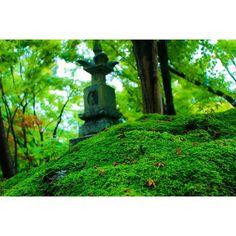 【photo_yuki1589】さんのInstagramをピンしています。 《#canon#一眼レフ#woods#森#苔#こけ#moss#green#landscape#風景#photos#photograph#photographer#photography#写真を撮るのが好きな人と繋がりたい#写真好きな人と繋がりたい#写真撮ってる人と繋がりたい#ファインダー越しの私の世界#写真倶楽部#japan#camera#instagramjapan#canon_amateur#lovers_nippon#instalike#canon_photos#canonphotography#photo_jpn#instagood#instalike》
