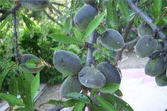 Florihana sweet almond oil http://www.florihana.com/en/vegetable-oils/sweet-almond-organic.html#.VE1Wo_nF98E