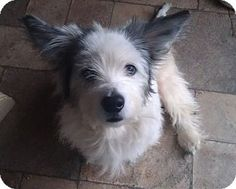 Charlie was adopted from Wags & Whiskers Animal Rescue of MN.   www.WagsMN.org