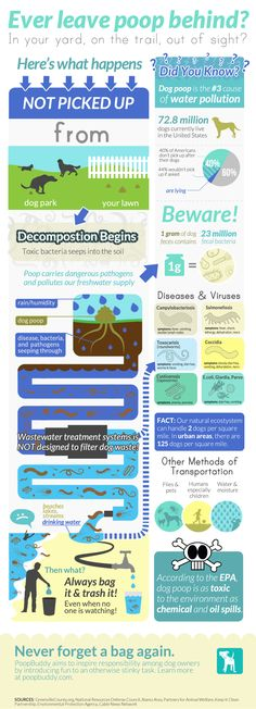 Free infographic dog poop water pollution poopbuddy