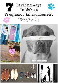 Get inspired! We have gathered seven darling ways to make a pregnancy announcement with your dog that are sure to melt everyone's hearts.