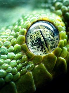 scary eye of some reptile…     I see the earth in its eye...