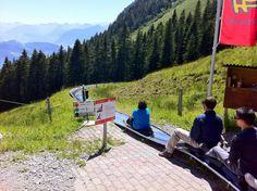 Switzerland dry tobogganing