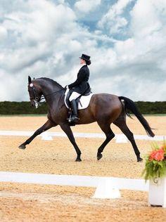 Lovely dressage horse!