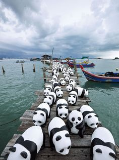 Malasya 1600 panda tour #travel #wanderlust #takemethere