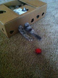 Cat cardboard fun! #cats #CatToy #cardboard
