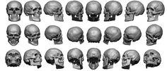 Anatomy 360 | Super High Res Skull Sheet