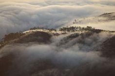 Mad Fog Sneeking Around Adams Peak, Sri Lanka Adam's Peak Sri Lanka, Places To Travel, Places To Go, Beautiful Sea Creatures, Wild Elephant, Largest Waterfall, Thing 1, Historical Sites, Natural Wonders
