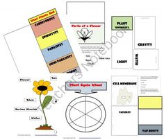 All About Plants from MsCristina on TeachersNotebook.com -  (18 pages)  - Botany all about plants lap book.