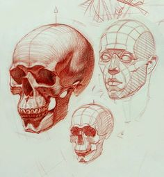 gone head skull anatomy drawing - Penelusuran Google