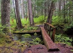 Hikes lead to many of the most beautiful places in Mt. Rainier National Park including huge crystalline mountain lakes, cascading waterfalls and more. Go Hiking, Hiking Trails, Hiking Maps, Wales, Mt Rainier National Park, England, Walk In The Woods, Day Hike, Outdoor Fun