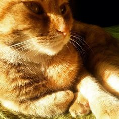 #eyes #sun #light #relax #cat #cats #catstagram #catsgram #catlovers #kitty #kitten #sexyanimal #sweety #pet #petstagram #friend #cute #novellaorchidea #novella #orchidea #raccontierotici #racconti #ebook #ricardo #tronconi #eroticnovel